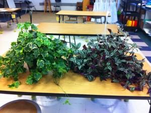plants-1024x764